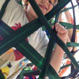 spiderweb-37